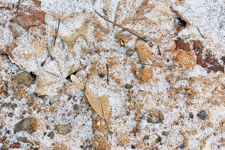 frosty: Frozen ground with snow and leaf in winter
