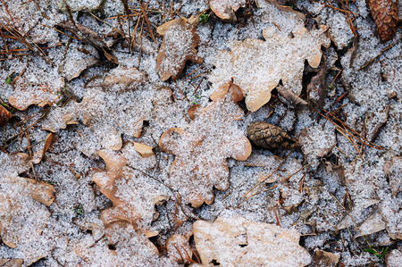 snow cone: Snow on leafs and cone laying on ground in winter
