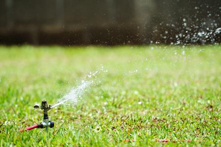 water sprinkler: irrigation of green lawn with water sprinkler