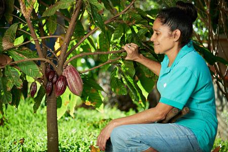 農家の女性が木にカカオの実を見てください。
