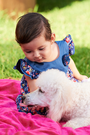 white poodle: small girl kid touching dog white poodle outside