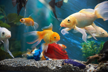green background: aquarium colourfull fishes in dark deep blue water