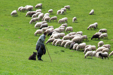 shepherd sheep: Shepherd with dog looking for sheep herd Stock Photo
