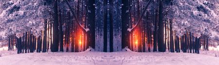 riverside trees: Frosty trees illuminated by the rising sun  ?rozen pine trees on snowy riverside Stock Photo
