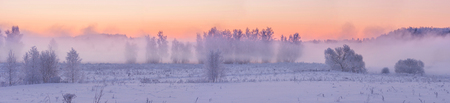 fog forest: Foggy winter sunrise with frosty trees in fog and frozen pine forest