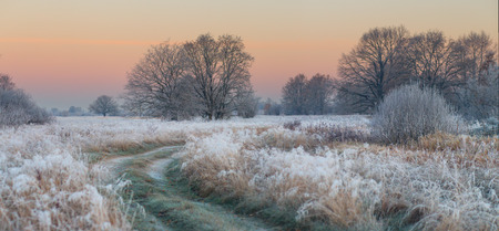 foggy autumn sunrise with frozen grass and trees