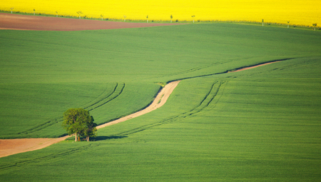 teen golf: Single apple tree on green meadow on sunny day