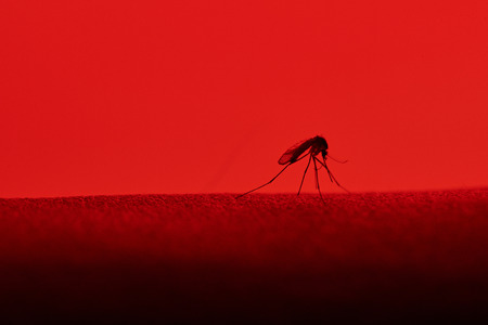 one mosquito sit on skin isolated red background