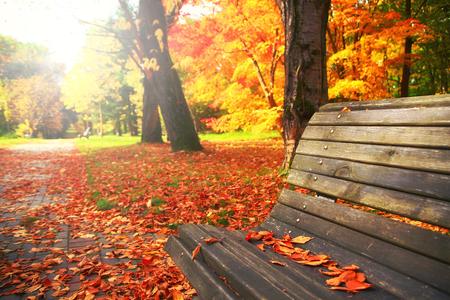 太陽は照らす秋の公園の木のベンチ