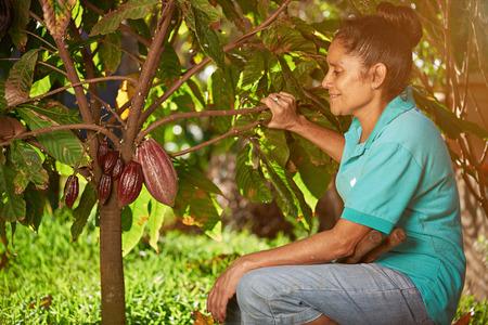Women farmer look at cacao pod on plantation tree