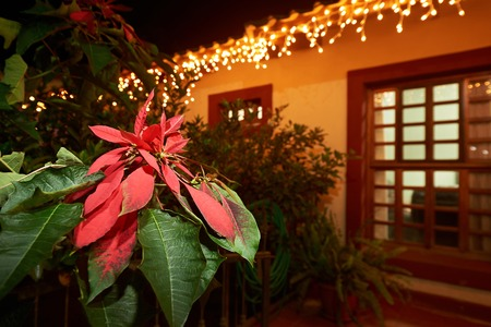Red petals leaf flower on christmas light decoration of house in tropics