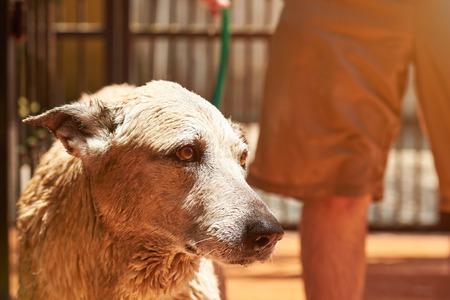 Sad dog taking bath on sunny summer day. Close-up of grooming dog