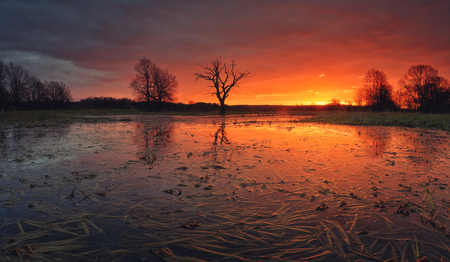 holland: Gorgeous sunrise over swamp. Colorful cloudscape above flooded meadow. Flooded meadow in the morning before rain. Beautiful morning background.