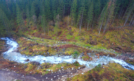 Mountain river in forest from above. Aerial view of Alpine forest with mountain ?reek.
