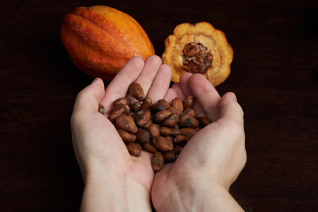 Fresh dry cacao beans in woman hands close up. Chocolate manufacture