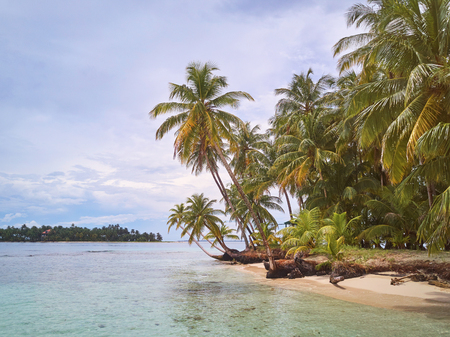 Vacation on caribbean island concept. Coconut palms on sunny day Stock Photo