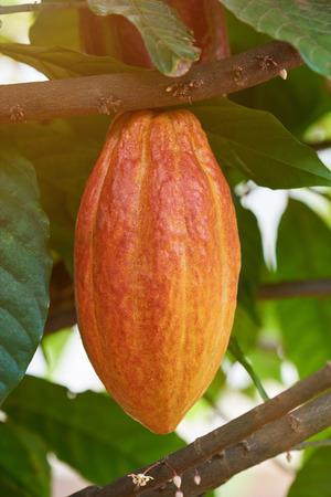 Schokoladenfruchtschale in der bunten sonnigen Baumhintergrundnahaufnahme