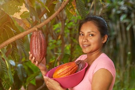 Young girl with ready to harvest cacao fruits on sunny summer background