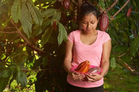 Woman Harvesting natural cacao raw fruits 版權商用圖片