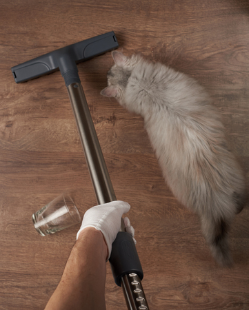 Cleaning house theme. Washing with vacuum cleaner wooden floor from pet fur