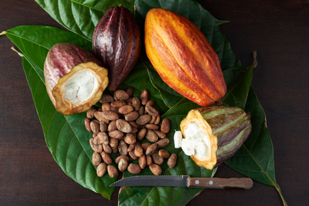Cacao harvest background. Set of raw chocolate ingredients