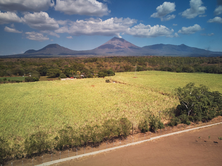 Big farm near volcano. Green field with sugarcane Stock Photo