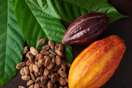 Raw sweet chocolate background. Seeds and cocoa plant theme Reklamní fotografie