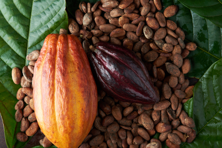 Cacao fruit theme. Set of cocoa pods with dry seeds Reklamní fotografie