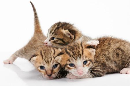 Gruppe von Kätzchen spielen isoliert auf weißem Hintergrund