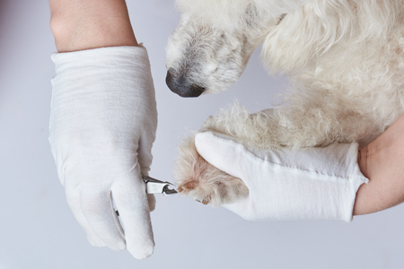 Dog have manicure in salon. Cutting dog claws Foto de archivo