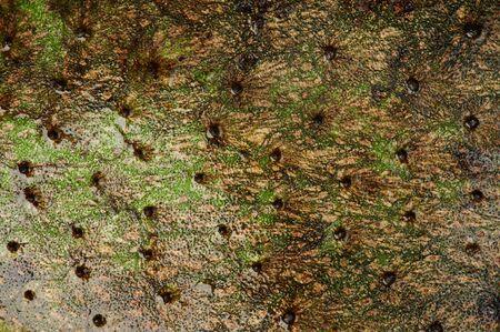 Texture of tropical soursop fruit macro close up view Stock Photo