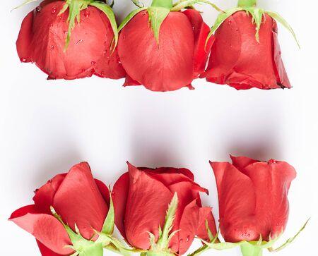 Red roses flower frame isoalted on white background