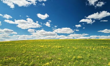 Green and yellow meadow on blue sky with clouds