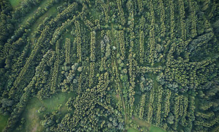 Forest maze shape lines aerial drone above top view