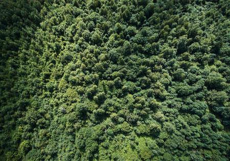 Green forest texture background aerial above top view Standard-Bild