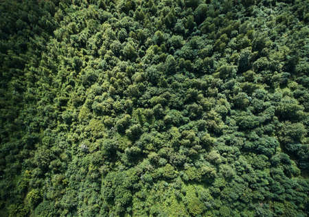 Green forest texture background aerial above top view Reklamní fotografie