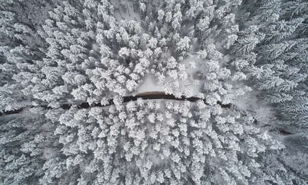 Rural road in winter forest background above top view