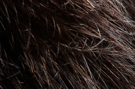 Close up of messy brunette hair. Clean wavy shiny hairstyle Standard-Bild