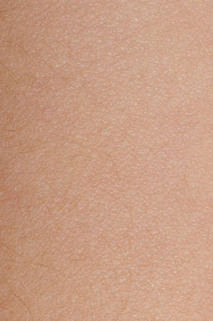 Brown skin texture with tiny hair background close up view Standard-Bild