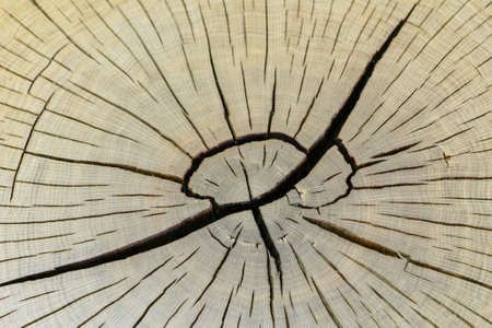 Close view of a warm orange tree stump with rings and texture highlights