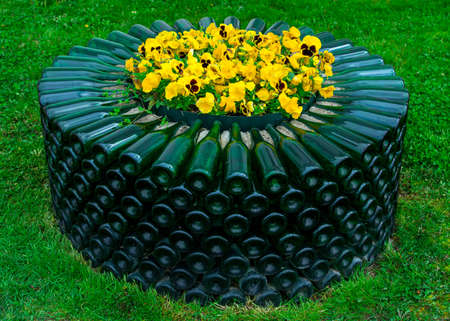 Yellow flowers in a bed of empty glass green wine bottles, Abrau-Durso. 版權商用圖片