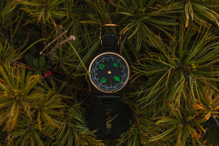 Travel, hiking, orienteering and navigation concept - black magnetic compass lies in pine branches, close-up