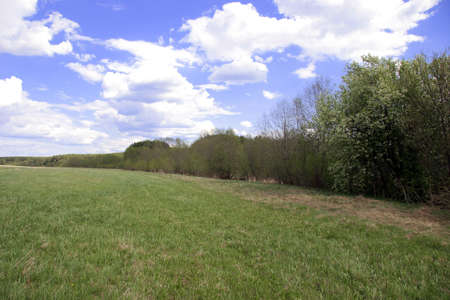 Green meadow Stock Photo - 1630871