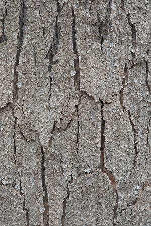 Textura de madera Foto de archivo - 88288210