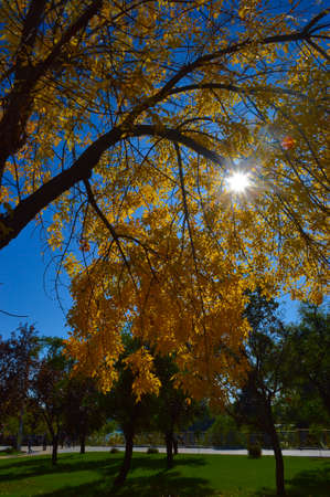 in the autumn in the park through the yellowed leaves of the trees the sun peeps Reklamní fotografie