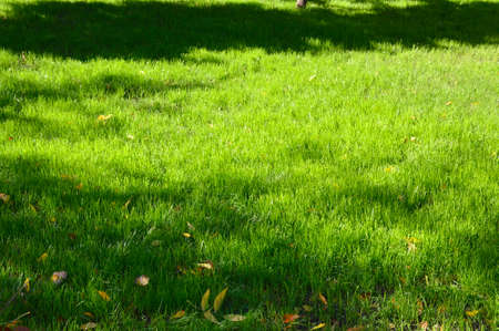 succulent, green grass and yellowed leaves lying on it