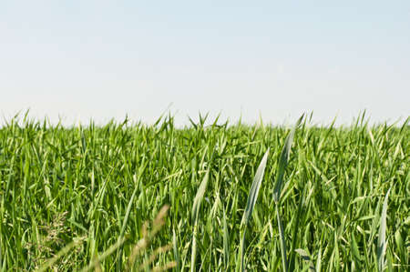 green grass and clear sky on a background Stock Photo - 9734404