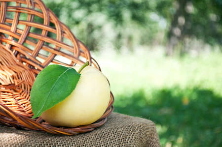 organic apple in the garden in the basket Stock Photo - 10613677