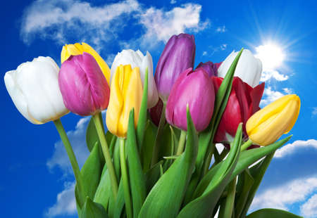 tulips flowers on a blue sky background photo
