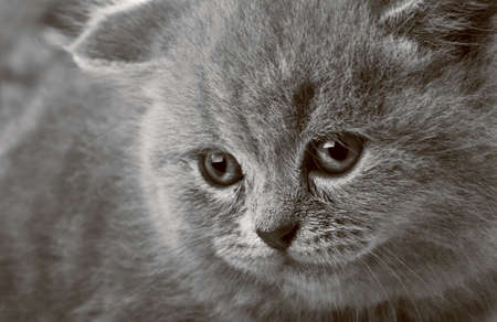 portrait of a beauty kitten background photo